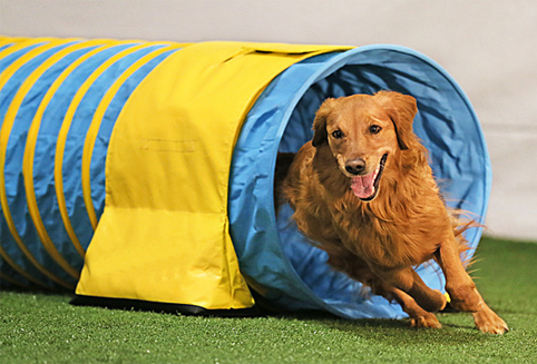 How to choose a suitable dog agility tunnel for your dog